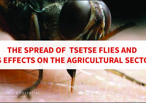 The Spread of Tsetse Flies and Its Effects on the Agricultural Sector